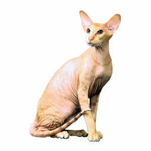 illustration PETERBALD